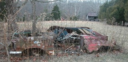 HM 1964 Ford as found. Make special note of the tree growing in the engine compartment that will be very important to the future of this car.